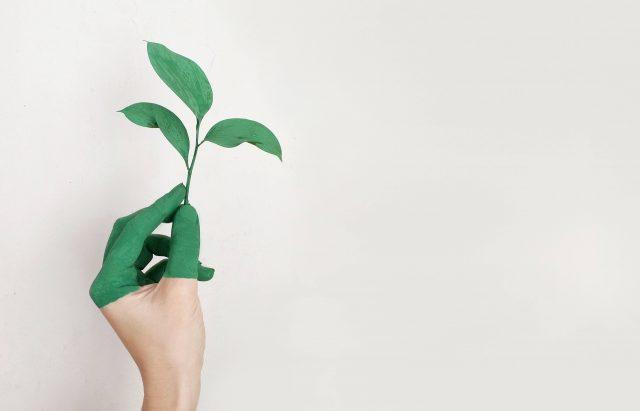 Frakta växter