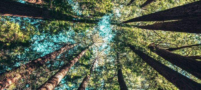 Säker trädfällning